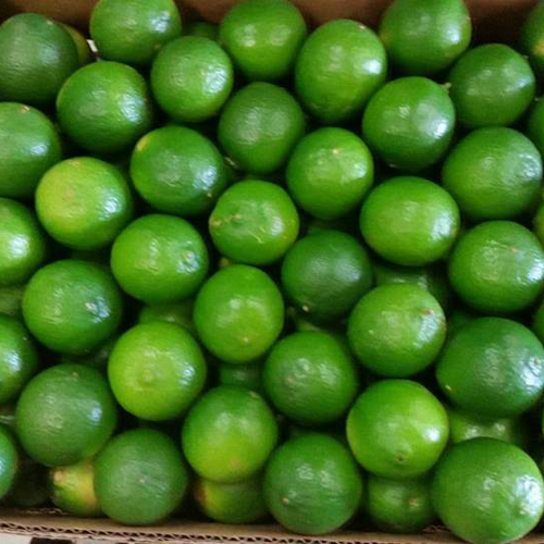 Fresh Lime/Lemon0