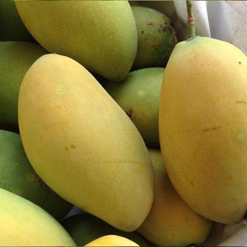 Hoa Loc Mango0